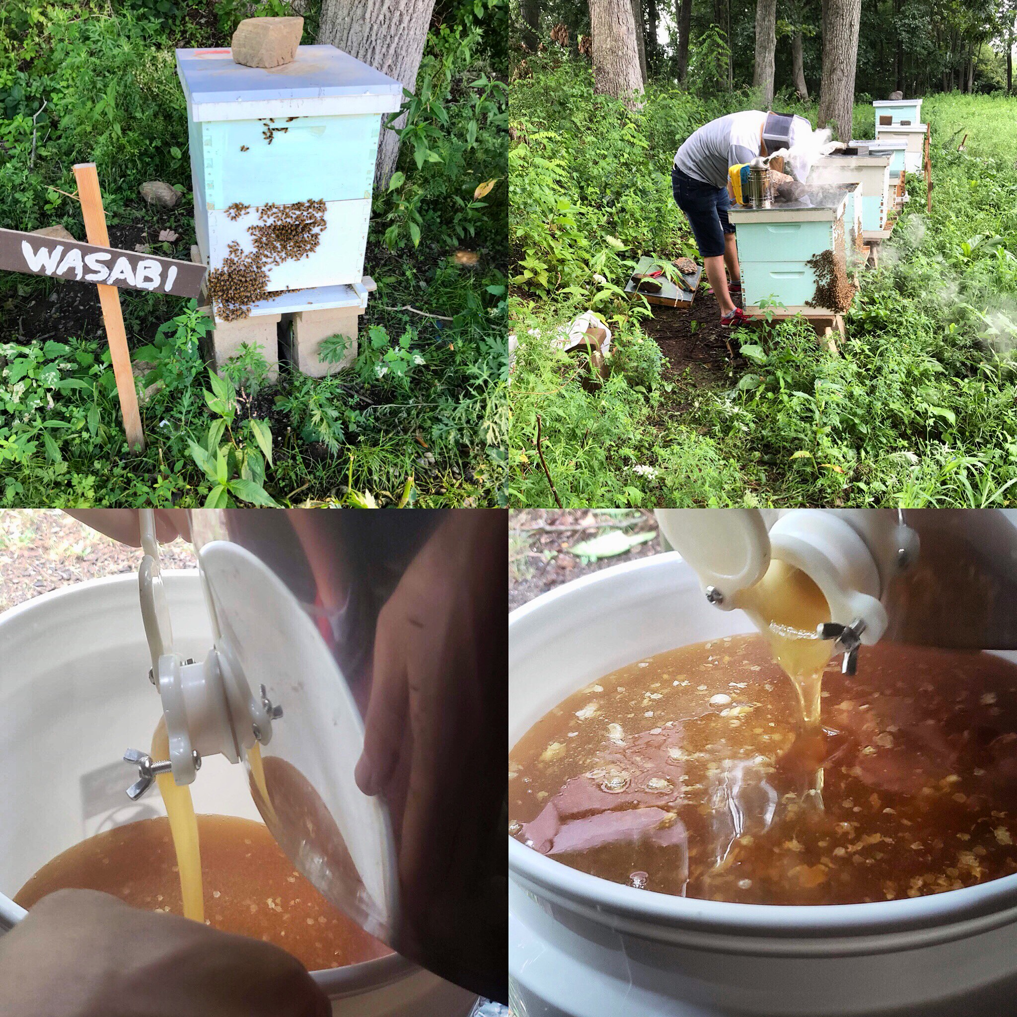 local honey from little pub